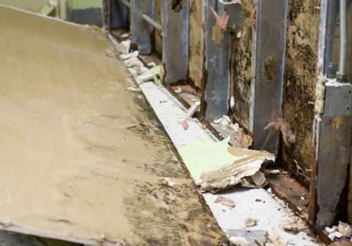 Mold Remediation & Removal Norwalk CA